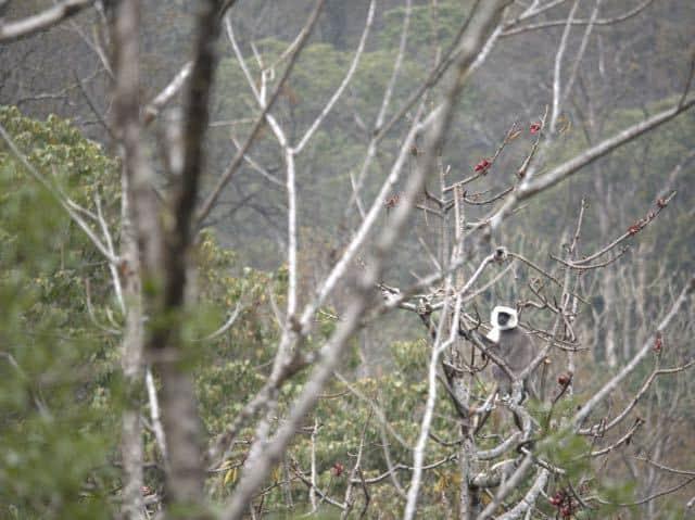 Animal-Climbing-Tree-Nepal-Forest