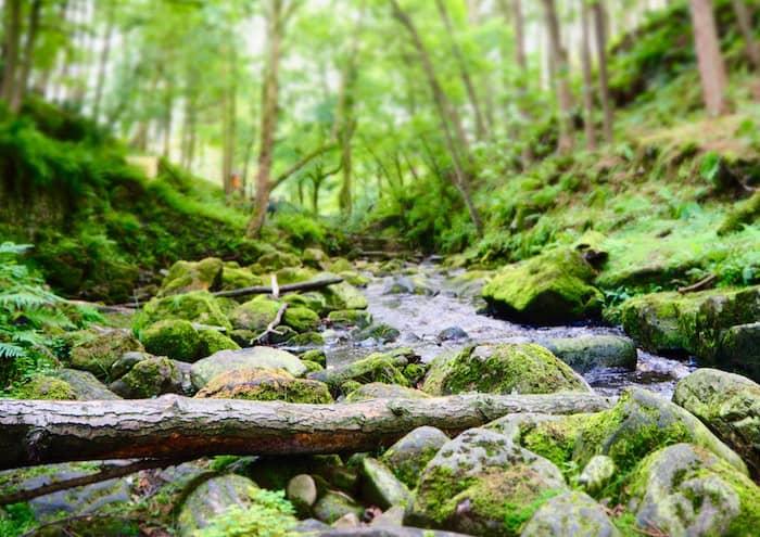 forest Nidderdale
