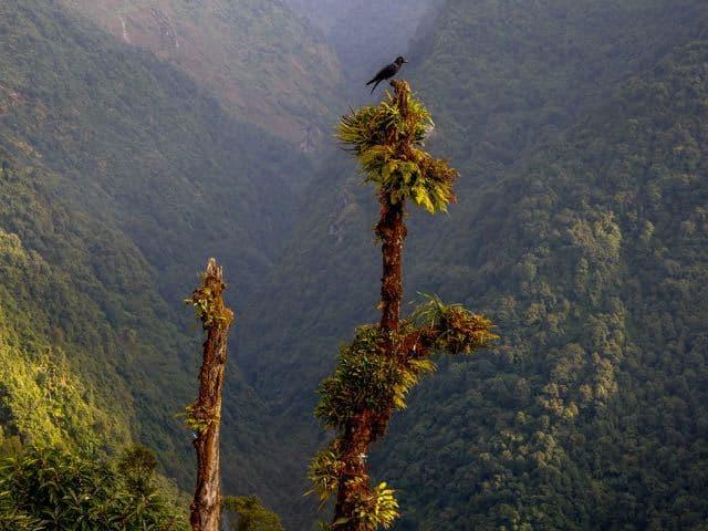 Bird-on-tree-Annapurna-Sanctuary