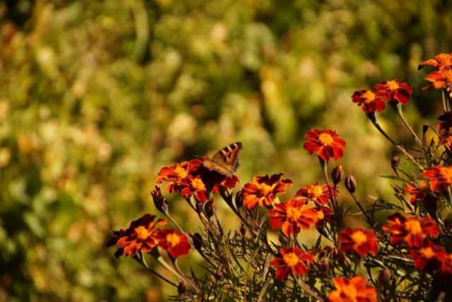 Butterfly_86