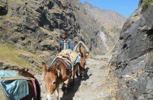 Donkey-Train