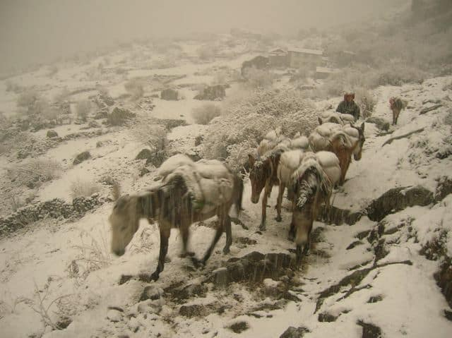 Donkey train in the snow at 4000m
