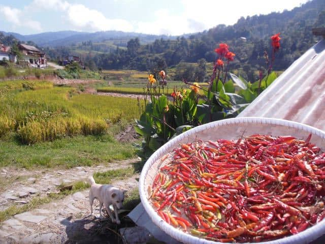 driying-chillies-on-a-roof