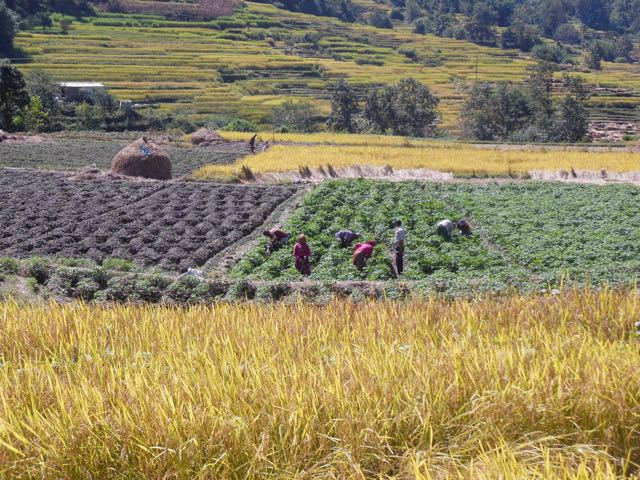 farm-workers-as-seen-from-bike-ride