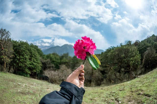 Flower-in-the-Mountains