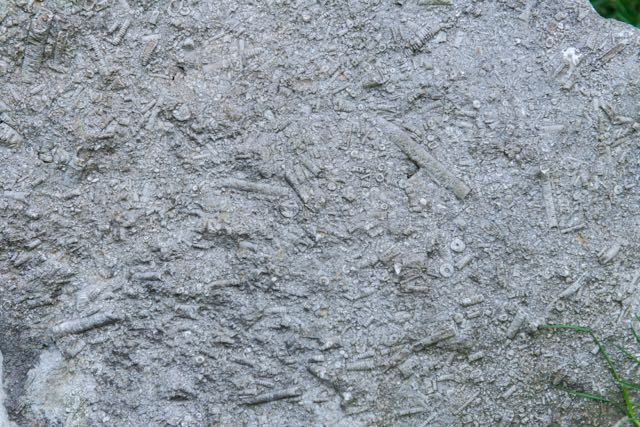 Fossils-in-Limestone
