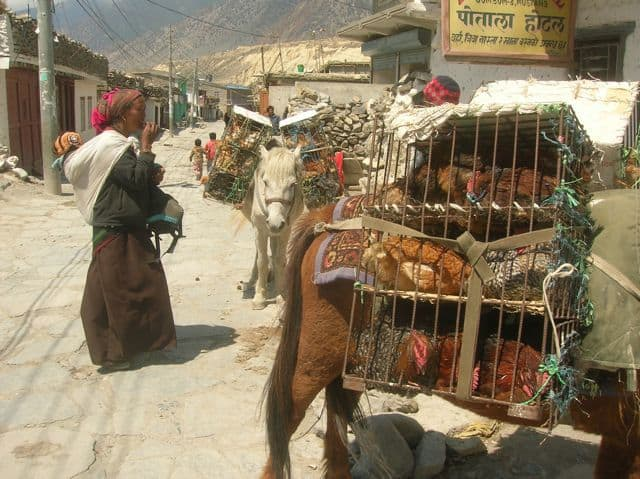 Himalayan Chicken Seller