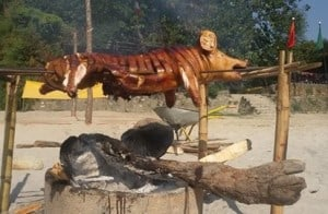 Hog Roasting a wild Boar at the Kayak Camp