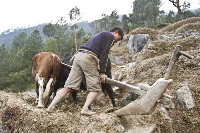 IMG_1100_Everest-Solu-seca-15-years-old-boy-using-halo-in-terrace-farming-near-pauway-khorda_Samir-Jung-Thapa_GHTDP_5