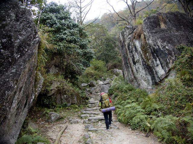 Man-Trekking-Forest-Makalu