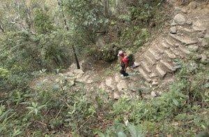 Man Trekking Stairs Makalu Forest