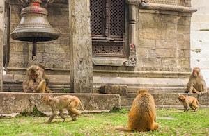 Temples-kathmandu