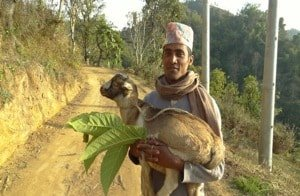 Goat herder in the Nepalese Himalaya