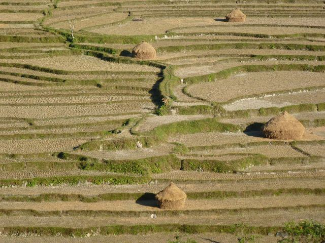 nepalese_terrace_fields_22
