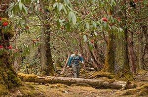 Rhododendron-Forest-Nepal-Trek