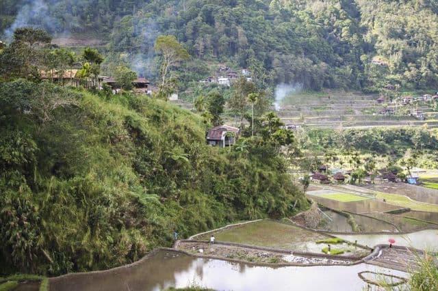Rice-Paddies-Nepal_65