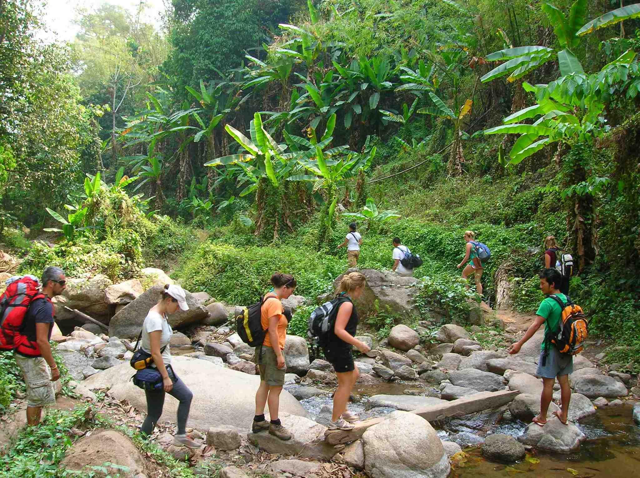 jungle trekking Bukit lawang jungle trekking,bukit lawang orangutan trek,orangutan jungle trekking,bukit lawang adventure jungle trekking,bukit lawang tour,bukit lawang trekking.