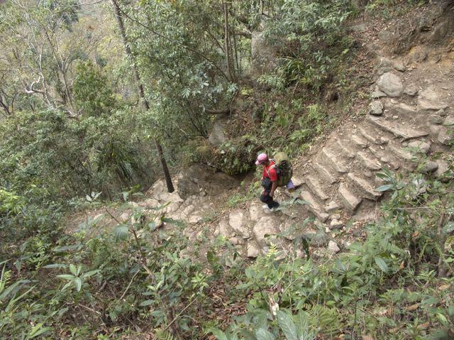 Trekking-Man-Forest