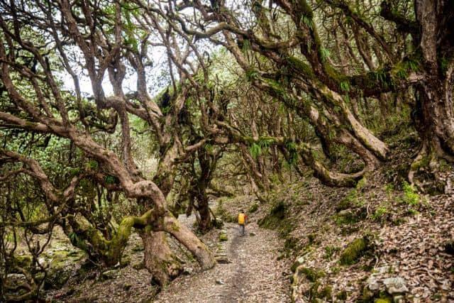 Trekking-Nepali-Forest