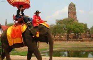 elephant-ayutthaya-thailand