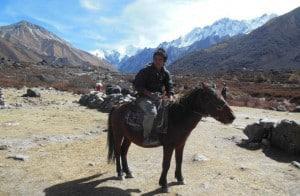 Horse in Langtang