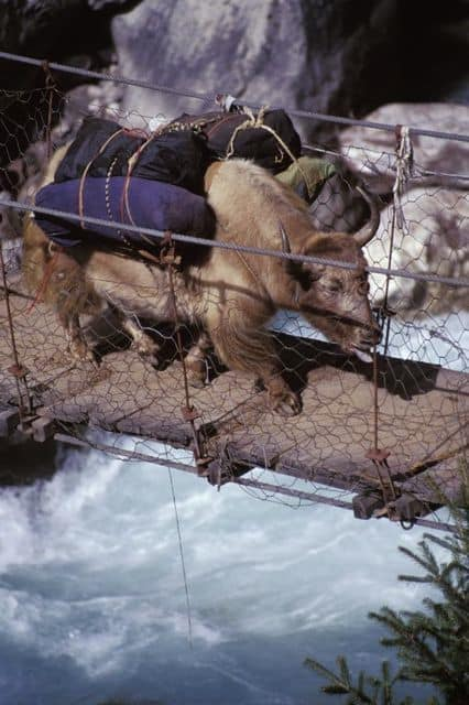 yak_bridge_nepal_17